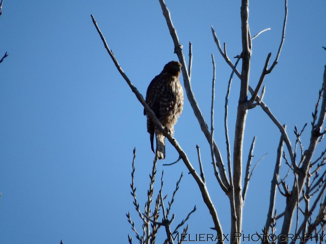 birds-193_orig.jpg